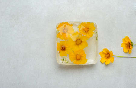 Frozen  flowers  inside the  ice cube on the gray background. Image with yellow  flowers. Horizontal with space for text. 免版税图像