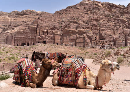 colonnaded: Camels and the Royal Tombs of archaeological city of Petra, Jordan