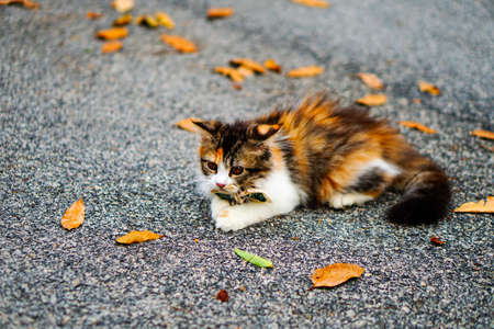 Cute cat kitten on a street playing.