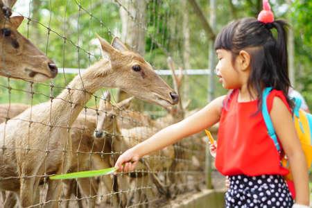 Asian Kids Cute Girl feeding deer in a petting zoo farm.