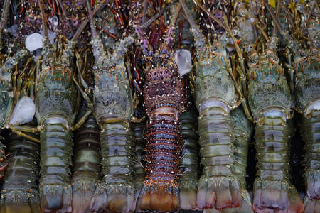 Close up Fresh Lobster on Ice for Sale at Local market