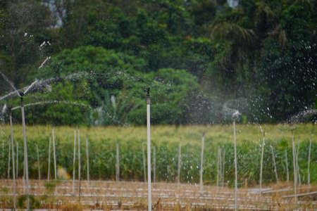 Irrigation system in function watering agricultural plants Foto de archivo