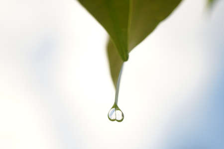 water drop on leaf over green background