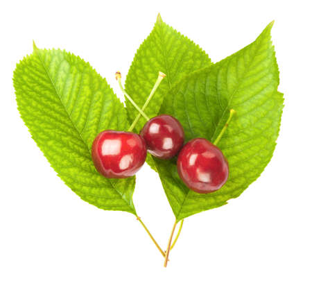 Cherries with leaves isolated on white background
