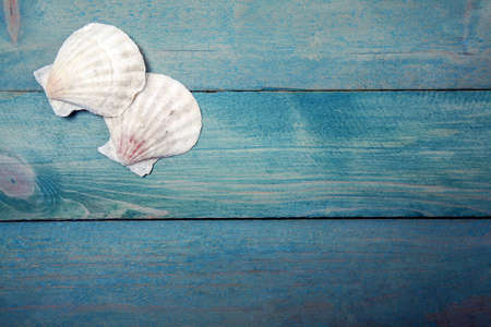 Two sea shells on old, blue wooden background