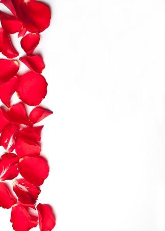 rose border:  Rose petal paper background