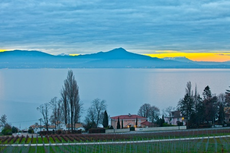 Chablais alps and Lake Geneva from a Swiss vineyard in the foreground photo