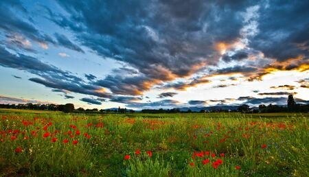 red poppies on green field: Poppy field with dramatic clouds at sunset
