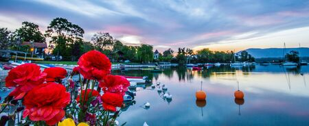 Beautiful flowers in the foreground of a pretty sunrise at a small bay at Lake Geneva, Switzerland  photo