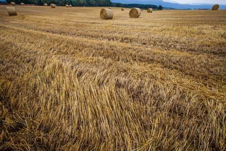 Wheat bale after harvesting season in Switzerland photo