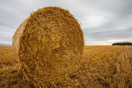 Wheat bale after harvesting season in Switzerland Imagens