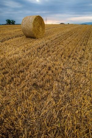 Wheat bale after harvesting season in Switzerland photo