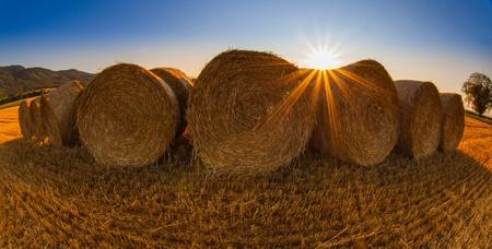 Wheat bale in a wheat field in Switzerland photo
