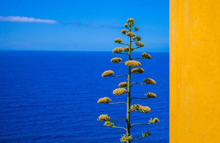 Bright yellow wall and the Mediterranean sea at Corniglia, Cinque Terre, Italy photo