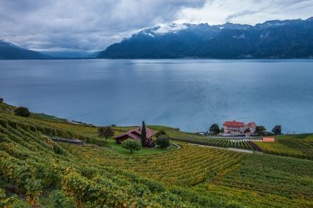 Weinberge bei Lavaux, Schweiz bei Sonnenaufgang