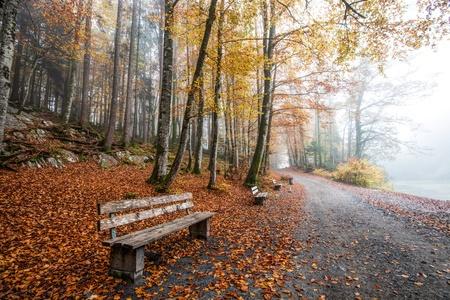 Empty bench in autumn in  forest  Standard-Bild