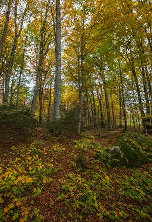 Forest autumn in Switzerland Stock Photo - 16063611