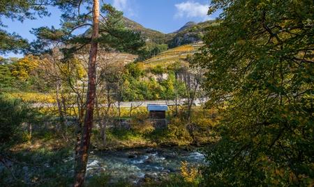 valais: Swiss vineyard at Canton Valais, Switzerland