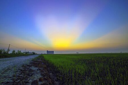 Sunset captured at a rice field in rural Malaysia photo