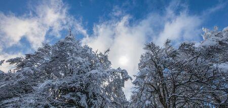 jura: Snow on the tree in the forest, Jura mountain range, Switzerland