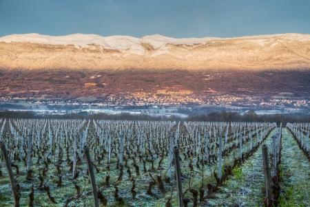jura: Vineyards and Jura mountain range, Switzerland