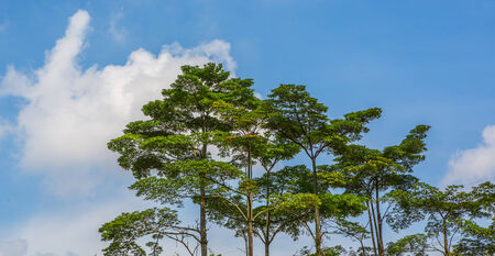 Tree tops in a tropical jungle photo