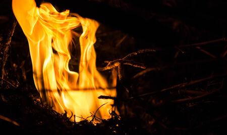 burning bush: Burning fire abstract at night