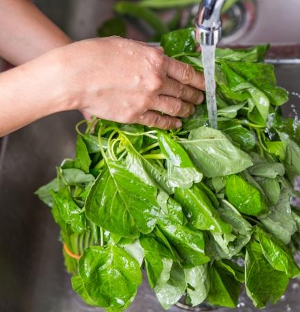 ingredients tap: Washing spinach vegetables in the kitchen sink