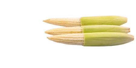 Baby corns over white background photo