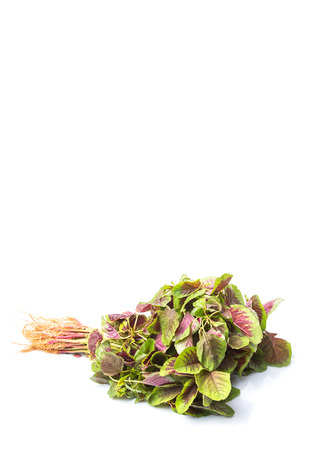 chinese spinach: A bunch of Chinese red spinach over white background Stock Photo
