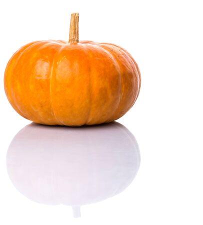 Pumpkin squash over white background
