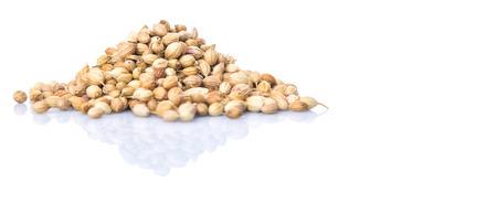 culantro: Semillas de cilantro sobre fondo blanco