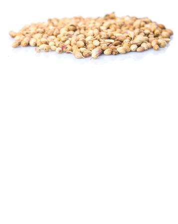 cilantro: Semillas de cilantro sobre fondo blanco