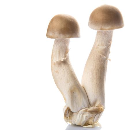 Japanese Shimeji mushrooms over white background