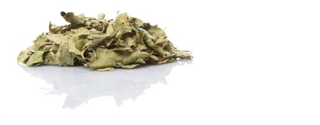 dry leaf: Dried curry leaves over white background