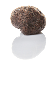 truffle: Black truffle mushroom over white background