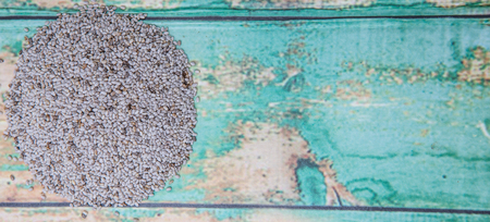 hispanica: White chia seed over wooden background Stock Photo