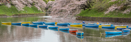 rowboats: TOKYO, JAPAN - APRIL 7TH 2016. Rowboats neatly arranged at lake in Chidorigafuchi, a popular sakura viewing spot in Tokyo, during Japans annual cherry blossom festival. Editorial
