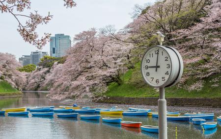Tokyo: Rowboats and cherry blossom at a lake in Chidorigafuchi, a popular sakura viewing spot in Tokyo, Japan