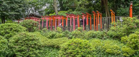 nezu: NEZU, TOKYO, JAPAN - 14TH MAY 2016. Orange wooden gates or Torii at Nezu Shinto Shrine. Toriis are donated by local companies to the shrine for good fortune. Editorial