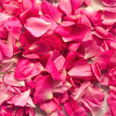 Petals of pink roses. Top view. Flatlay. Close-up. Floral romantic background. Pink color