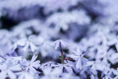 tiny: Tiny flowers
