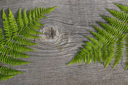 hojas antiguas: Green ferns on old wooden texture. Background. Leaves on wooden texture