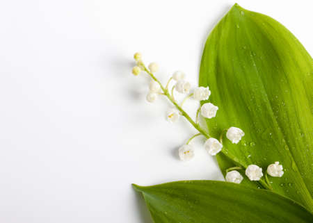 muguet: beautiful flowers on a white background. Lilies of the valley. spring background with free space for text