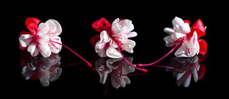 flores fucsia: Hermosas flores de color fucsia con la reflexión sobre fondo negro