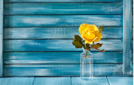 yellow rose on a background of blue painted boards. flower in a decorative bottle