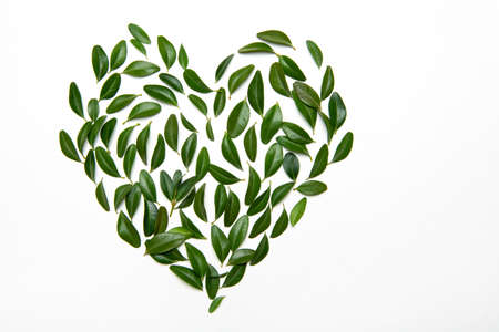 Green leaves on white paper are scattered in the shape of a heart. Floral pattern. Flat ley.