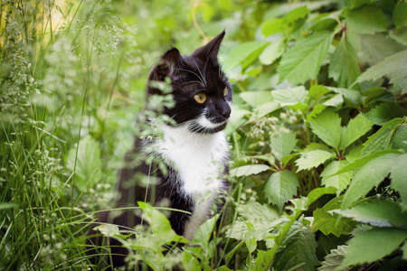 A homeless cat is sitting in a park in green foliage.