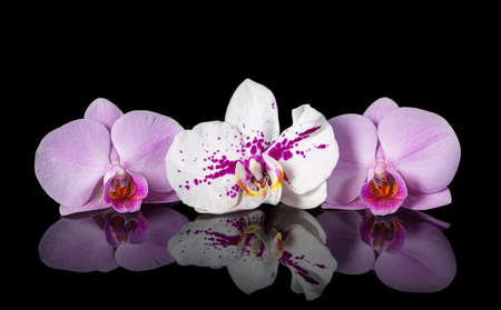 Orchids. Beautiful flowers with reflection