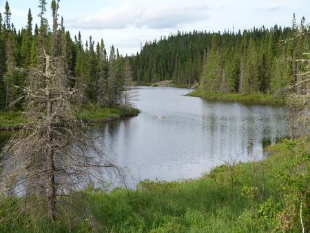 Lush green summer forest near Wawa Ontario Canada
